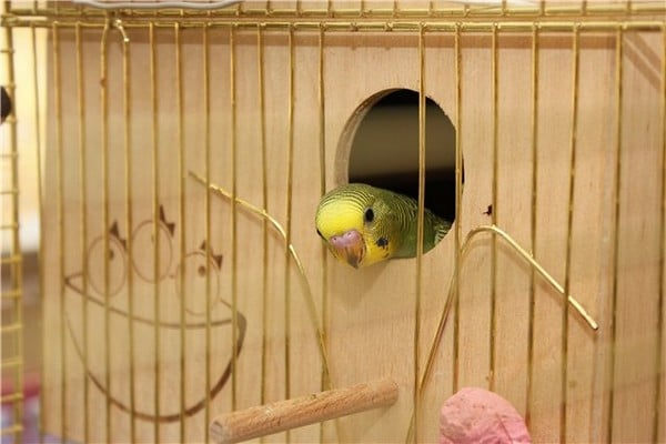 Гнездо для волнистых попугаев фото размеры