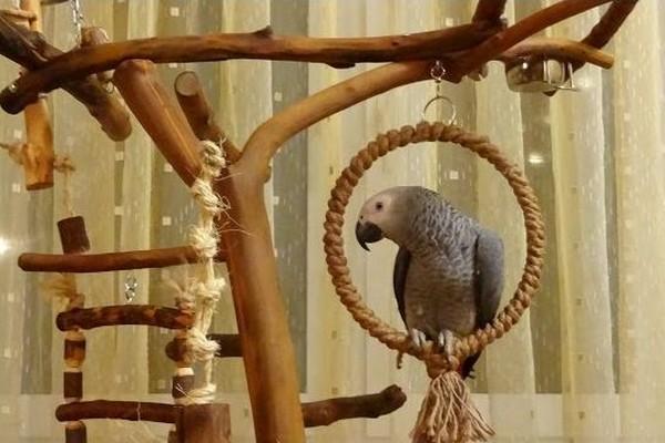 Стенд для попугая