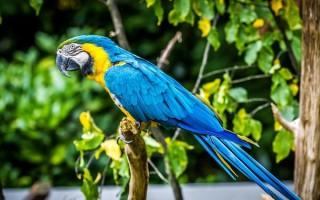 Сколько может стоить попугай ара