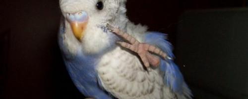 Лапы попугая и их роль в жизни питомца