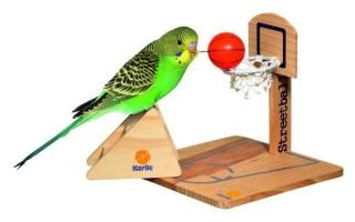 Совету по выбору аксессуаров для волнистых попугаев