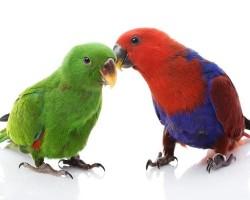 Виды зеленых попугаев