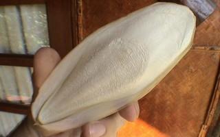 Польза от минерального камня и сепии для попугаев