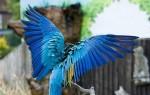 Виды травм крыла у попугаев и их лечение