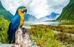 Среда обитания и содержание в неволе сине-желтых попугаев ара