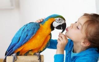 Какими бывают домашние попугаи