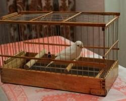 Преимущества и недостатки деревянных клеток для птиц (попугаев)
