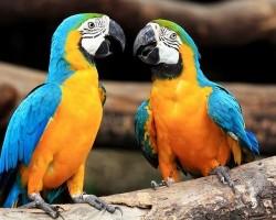 Какие попугаи самые большие в мире?