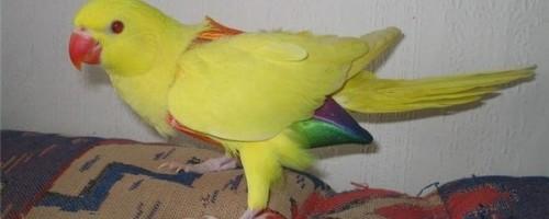 Выбор памперсов для попугаев