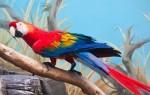 Попугай на английском языке – правильные переводы и произношение