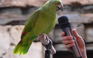 Простые фразы для попугая