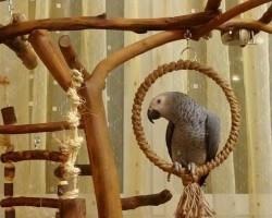 Как выбрать стенд для вашего попугая