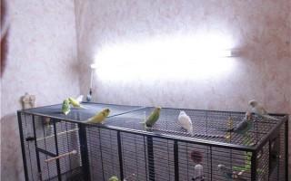 Лампа для содержащегося в неволе попугая