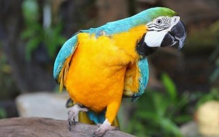 Сколько живет большой и красивый попугай ара в домашних условиях