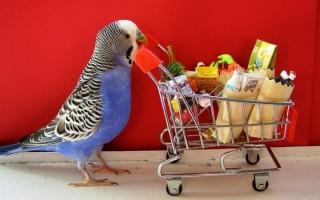 Витамины для всех видов попугаев