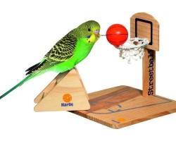 Выбор игрушек для волнистых попугаев