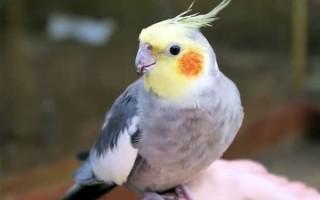 Как видит попугай наш мир