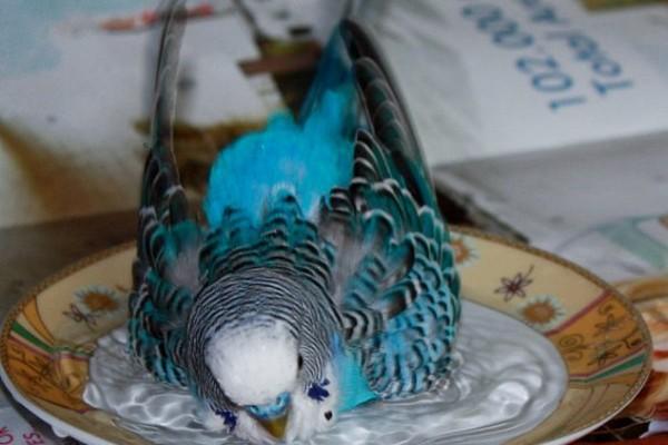 Купание в тарелке