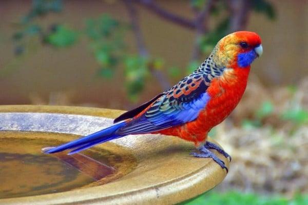 Попугай с пестрой раскраской