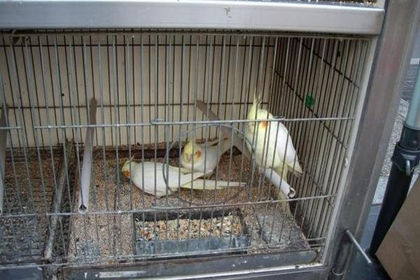 Попугаи внутри клетки