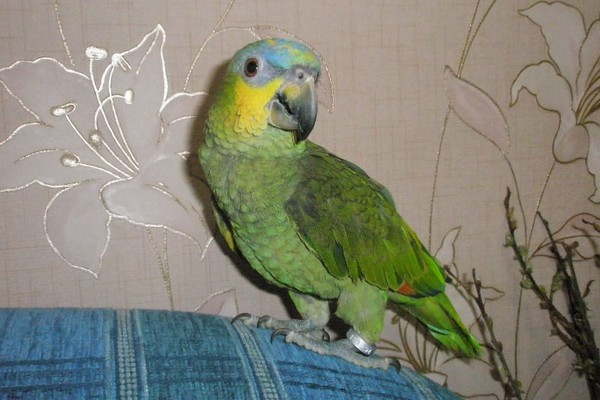 Попугайчик на диване
