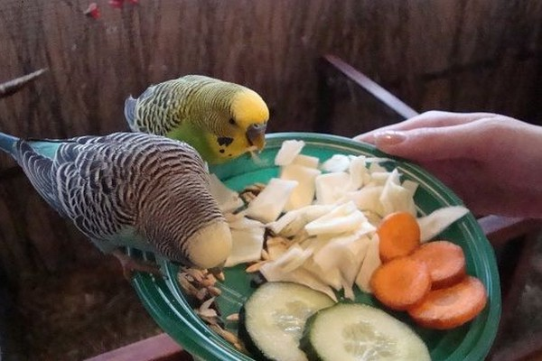 Пир для попугаев