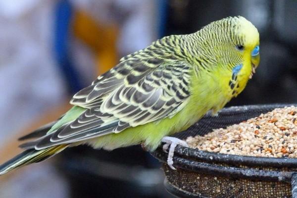 Кормилка для попугаев