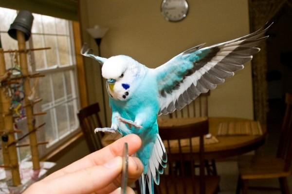Как понять, что птица вам доверяет