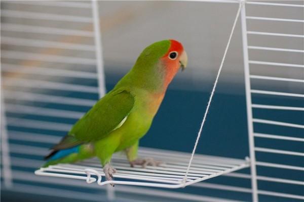 Попугай на фоне клетки