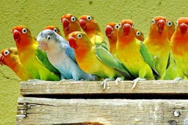 Группа попугаев