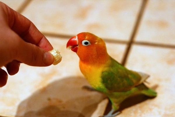 Угощение для попугая