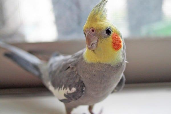 Попугай с яркой раскраской