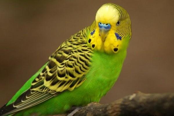 Попугай с зеленой окраской