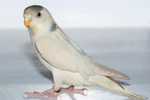 Красивый попугайчик