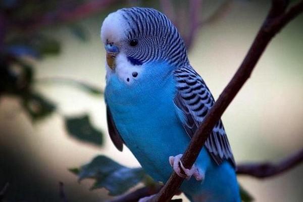 Попугай на синем фоне