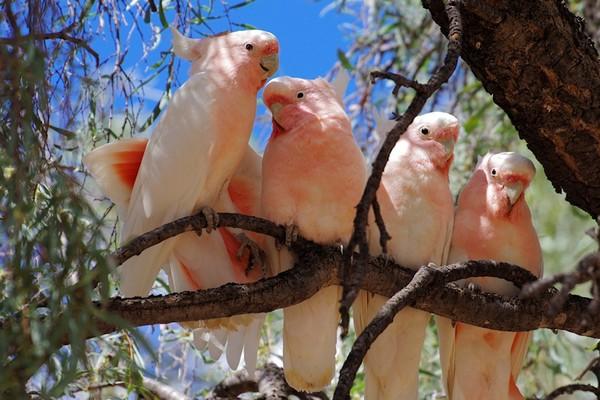 Группа птиц