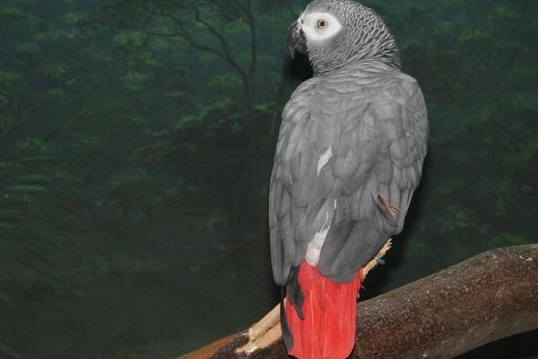 Попугай с красивым оперением