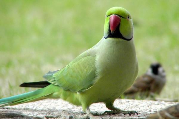 Забавный попугайчик