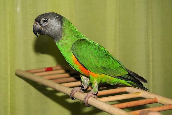 Птичка на лесенке