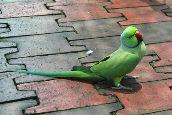 Птичка на плитке
