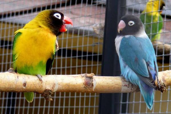 Сколько живут попугаи 69