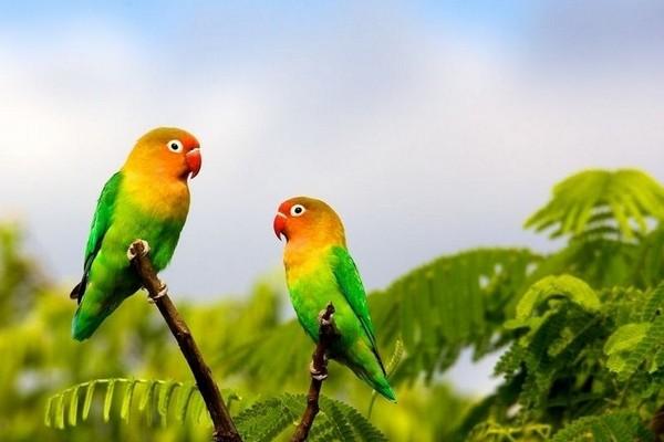 Попугаи не верхушке дерева