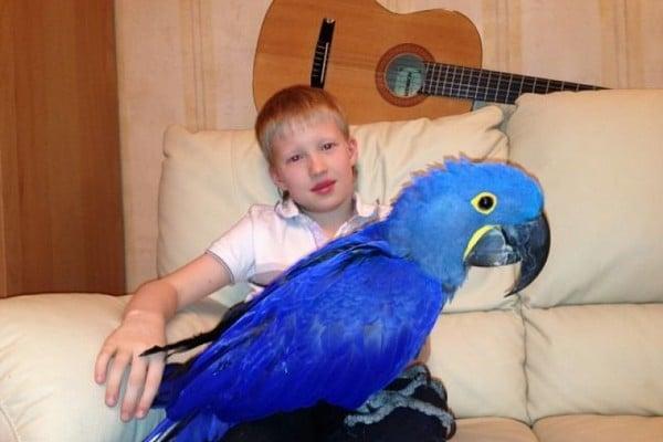 Мальчик и попугай