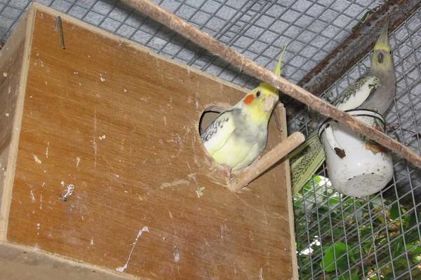 Гнездо для попугая