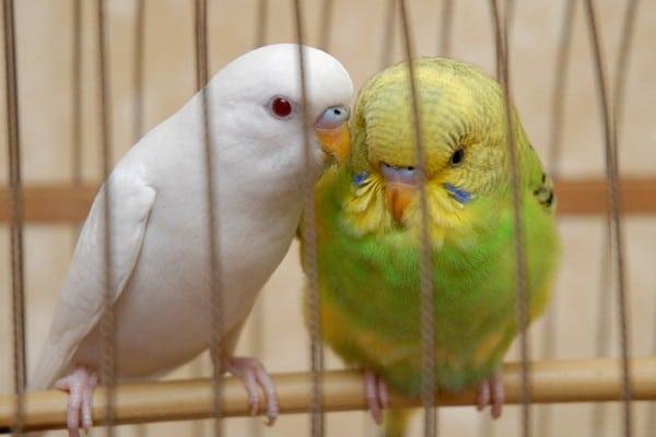 Попугаи разной окраски