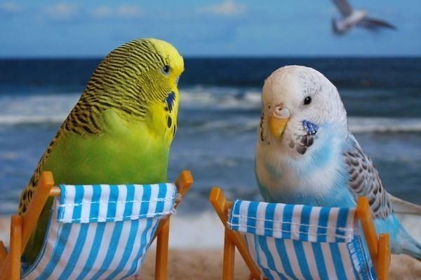 Попугаи на пляже