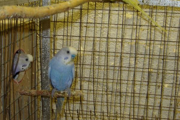 Домик-гнездо