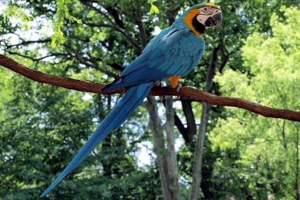 Сидящий на ветке попугай