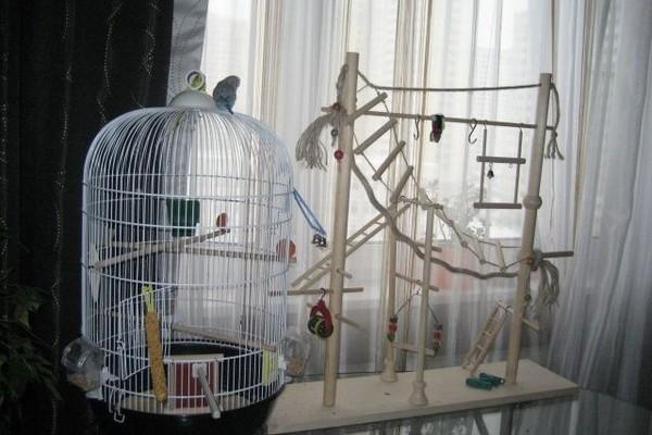 Приспособления для птиц