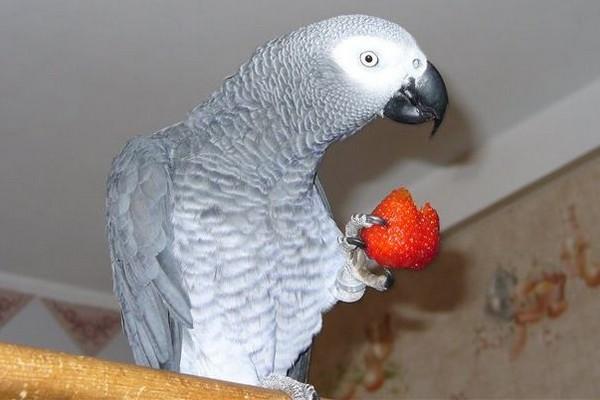 Жако с клубникой